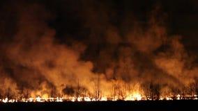 Fuego de la noche en un campo almacen de video