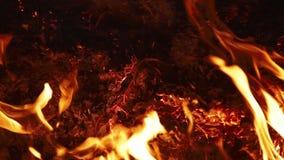 Fuego de la noche en un fondo negro almacen de metraje de vídeo