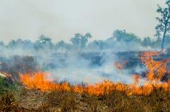 Fuego de la paja Fotos de archivo libres de regalías