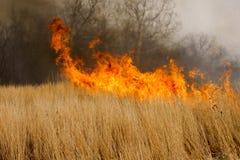 Fuego de la pradera Foto de archivo