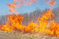 Fuego de la pradera Fotografía de archivo libre de regalías