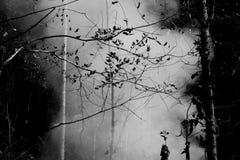 Fuego de la pradera del humo Resplandores de la hierba seca entre la destrucción de los arbustos de bosques foto de archivo libre de regalías