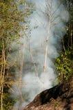 Fuego de la pradera del humo Resplandores de la hierba seca entre la destrucción de los arbustos de bosques imagen de archivo