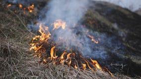 Fuego de la pradera La hierba seca se arde entre los arbustos, fuego en área de los arbustos Cambio de clima, fuegos crecientes d metrajes
