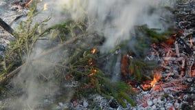 Fuego de la primavera en fondo del jardín almacen de video