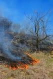 Fuego de la vegetación Foto de archivo