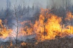 Fuego de madera Foto de archivo