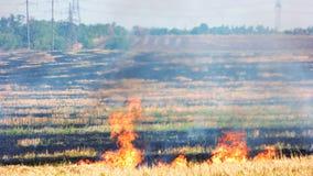 Fuego del prado, campo enorme almacen de video