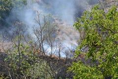 Fuego del verano, Italia del sur Foto de archivo