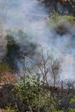 Fuego del verano, Italia del sur Fotografía de archivo libre de regalías