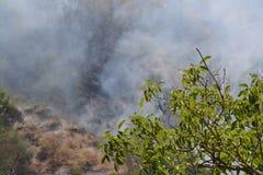 Fuego del verano, Italia del sur Foto de archivo libre de regalías