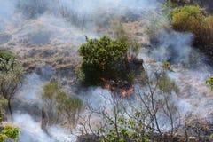Fuego del verano, Italia del sur Imágenes de archivo libres de regalías