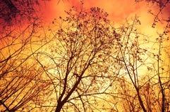 Fuego en bosque Fotos de archivo