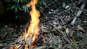 Fuego en bosque almacen de video