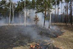 Fuego en bosque del pino de la primavera Foto de archivo libre de regalías