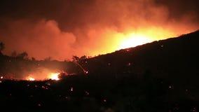 fuego en bosque en la noche almacen de video