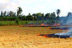Fuego en campo del arroz Imagen de archivo libre de regalías