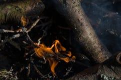 Fuego en campo hoguera imagen de archivo
