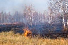 Fuego en el bosque Imagenes de archivo