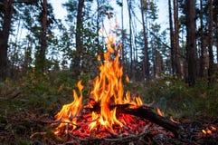 Fuego en el bosque Fotos de archivo libres de regalías