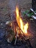 Fuego en el bosque Imagen de archivo libre de regalías