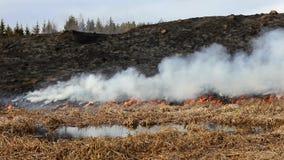 Fuego en el bosque almacen de metraje de vídeo