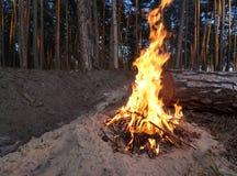 Fuego en el bosque Fotografía de archivo libre de regalías