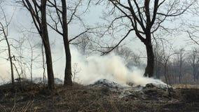 Fuego en el bosque con un humo fuerte almacen de metraje de vídeo