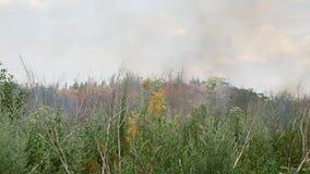 Fuego en el bosque, los árboles ardientes y la hierba almacen de video