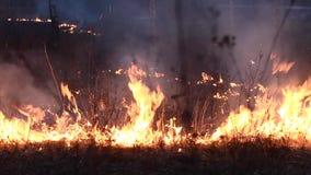 Fuego en el bosque por la tarde almacen de metraje de vídeo