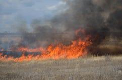 Fuego en el campo Foto de archivo