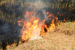 Fuego en el campo Imágenes de archivo libres de regalías