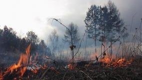 Fuego en el campo de hierba seca almacen de video