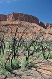 Fuego en el desierto Imagen de archivo