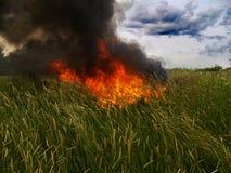 Fuego en hierba Imagenes de archivo