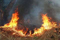 Fuego en hierba seca y árboles Fotografía de archivo libre de regalías