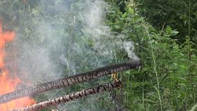 Fuego en la catástrofe de Eco del bosque en naturaleza 4K metrajes