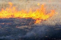 Fuego en la estepa Cañas secas ardientes Fotografía de archivo libre de regalías
