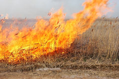 Fuego en la estepa Cañas secas ardientes Imágenes de archivo libres de regalías