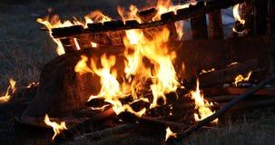 Fuego en la naturaleza almacen de video