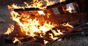 Fuego en la naturaleza almacen de metraje de vídeo