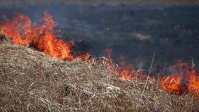 Fuego en la naturaleza del bosque metrajes