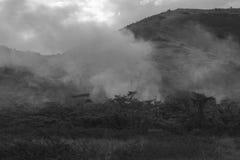 Fuego en la vegetación Imagen de archivo libre de regalías