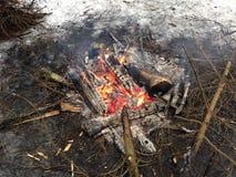 Fuego en las maderas Imagen de archivo