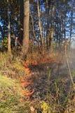 Fuego en madera de roble imagen de archivo