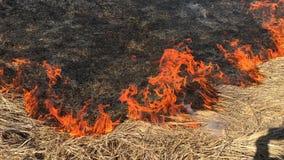 Fuego en naturaleza del bosque metrajes