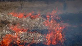 Fuego en naturaleza del bosque almacen de video