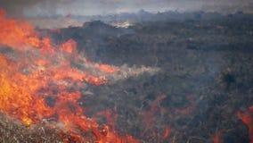 Fuego en naturaleza del bosque almacen de metraje de vídeo