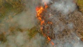Fuego en un arbusto tropical almacen de metraje de vídeo