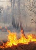 Fuego en un bosque Imágenes de archivo libres de regalías